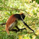 zanzibar-jozani-forest-tour